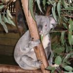 オーストラリアに旅行に行きました。